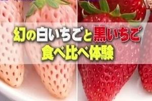 千葉ツアー.JPG